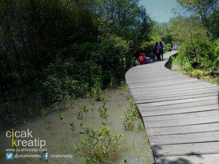 hutan mangrove surabaya1