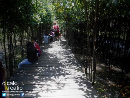 hutan mangrove surabaya3