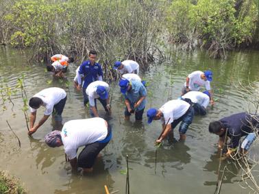 Penanaman 100 bibit mangrove di kawasan mangrove Bulaksetra Pangandaran (2)